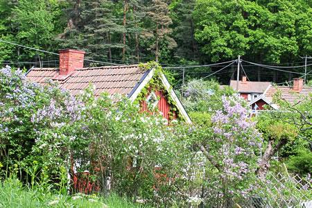 北欧スウェーデン、サマーハウス、赤い小さな家がたくさん並んでいます。